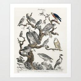 Bowhead Whale Art Print