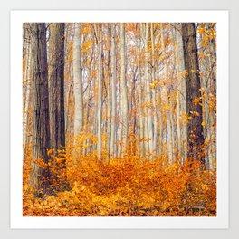 Golden Autumn Forest (Color) Art Print