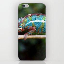 Turquoise Chameleon iPhone Skin