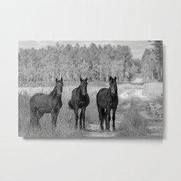 Three Brumbies Metal Print