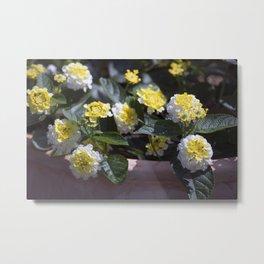 Longwood Gardens - Spring Series 138 Metal Print