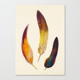 Three Feathers Canvas Print