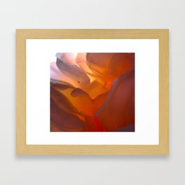 A rose is a rose Framed Art Print