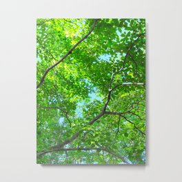 Canopy of Green, Leafy Branches with Blue Sky Metal Print
