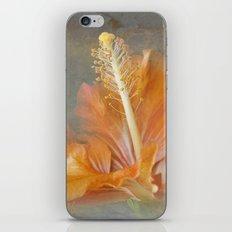 Winged Surprises iPhone & iPod Skin
