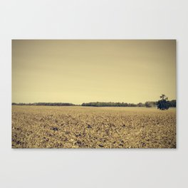 Lonely Field in Brown Canvas Print