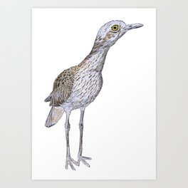 Suspicious Curlew Art Print