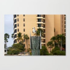 Seagulls lookout Canvas Print