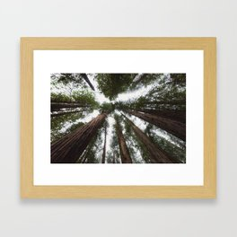 Redwood Portal - nature photography Framed Art Print