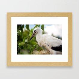 Orphaned one White Stork Framed Art Print