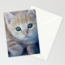 Red Kitten Stationery Cards