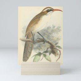 Red-billed Scimitar-Babbler, pomatorhinus ochraceiceps10 Mini Art Print