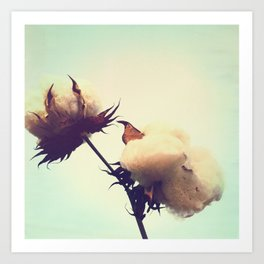 Cotton Plant Art Print