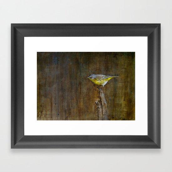 Nashville Warbler Framed Art Print