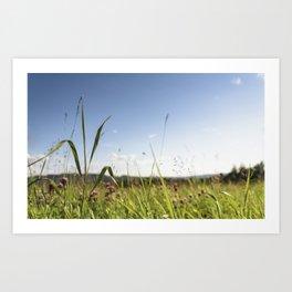 Summer grass Art Print