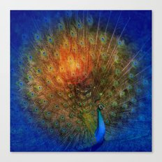 Peacock in Blue Canvas Print