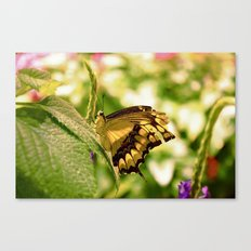 Fragile Spring Canvas Print
