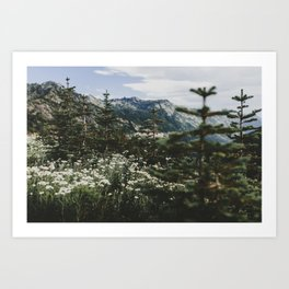 Mount Rainier Summer Wildflowers Art Print