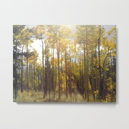 Awash in fall Metal Print