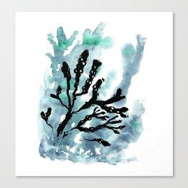 Bladder Wrack Canvas Print