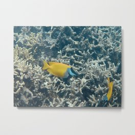 Yellow Fish Micronesia Metal Print