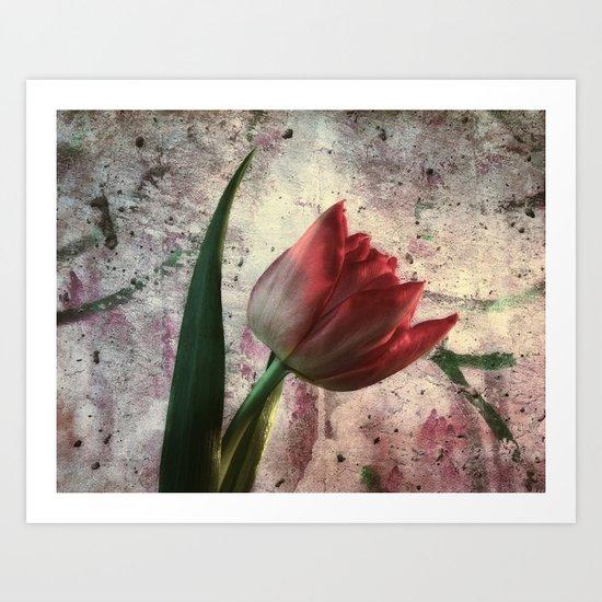 asia tulip Art Print
