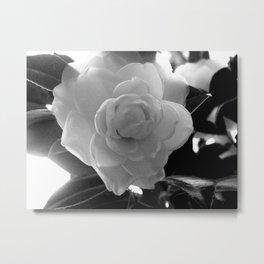 Petals B&W Metal Print