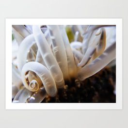 Sea Anemone Art Print