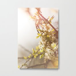 Sunny Blossom Metal Print
