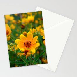 Beggartick Flowers Yellow Daisy Spring Wildflowers Stationery Cards