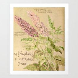 garden 076 buddleia magnifica Art Print