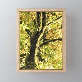 Maple Divine Framed Mini Art Print