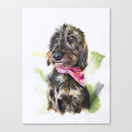 Lulu the Wire Haired Standard Dachshund #115 Canvas Print