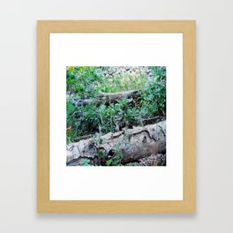 WOODSY WOODLAND Framed Art Print