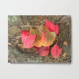 As the Seasons Turn Metal Print