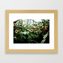 Flower heads Framed Art Print