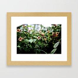 Flower heads Framed Art Print