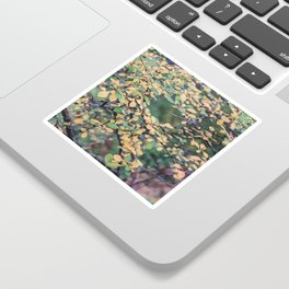 New York Nature V Sticker