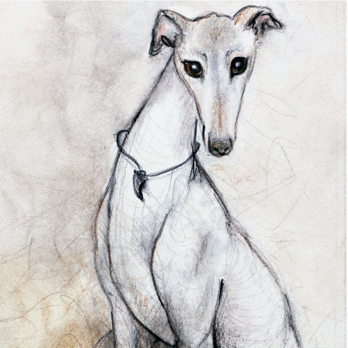 The Greyhound Wearing His Thorn Comforters