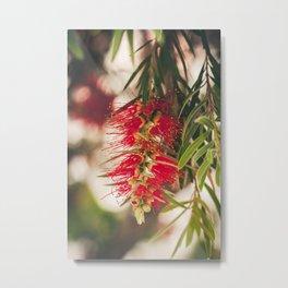 May flowers I Metal Print