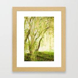 Spring Willow Framed Art Print