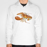 lobster Hoodies featuring Maine Lobster by Tim Jeffs Art