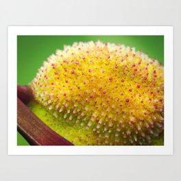 Macro shot of canna indica fruit Art Print