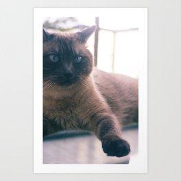 Bibi_Cat Art Print