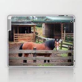 Bay Paso Fino Laptop & iPad Skin