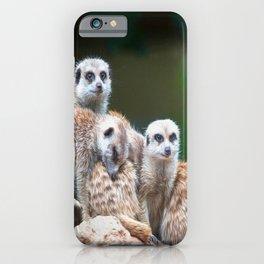 Meerkat Family  (digital painting) iPhone Case