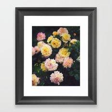 Rose Garden II Framed Art Print