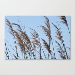 cane  plant in the wind on the shore of the lake Canvas Print