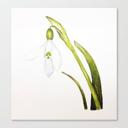 Watercolour Painting of a Snowdrop Canvas Print