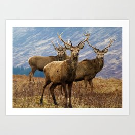 The four stags on the loch Art Print